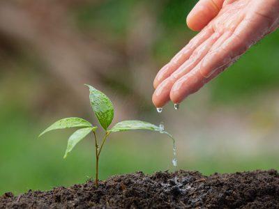 Dia da Árvore: desperte a consciência ambiental nos estudantes